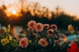 Quelles fleurs offrir à la fête des mères ?